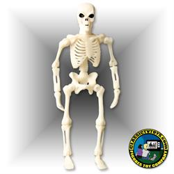 8 inch Skeleton Figures
